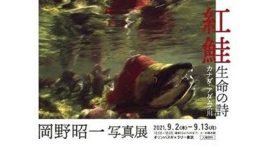 岡野昭一写真展「紅鮭・生命の詩」開催中